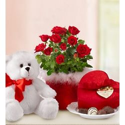 I Love You Roses, Chocolate and Teddy Bear Set