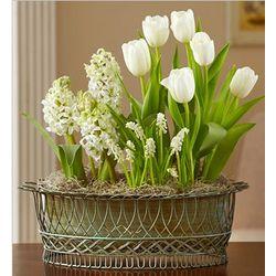 Sentimental Tulip Garden