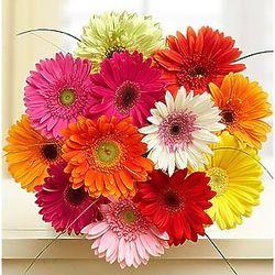 12 Gerbera Daisies Bouquet