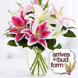 Thinking of You Oriental Lily Bouquet