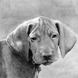 Hand Drawn Pencil Sketch of Your Dog - 8x10