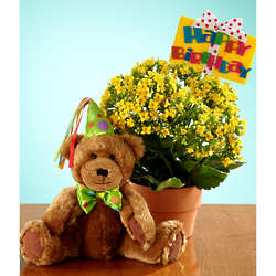 Happy Birthday Bear and Kalanchoe Bouquet