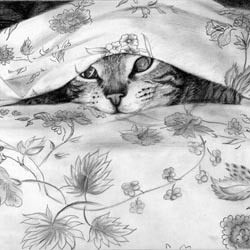 Hand Drawn Pencil Sketch of Your Cat
