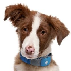 Tagg Pet Tracker Master Kit
