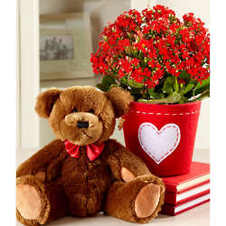 Love Bear and Kalanchoe Plant