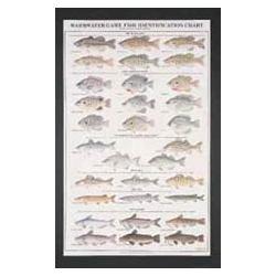 Gamefish Poster