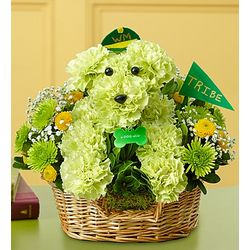 William and Mary Tribe Pride aDOGable Bouquet