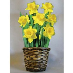 Daffodil Delight Flower Bulb Gift Basket