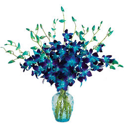 Stunning Sapphire Orchids Bouquet