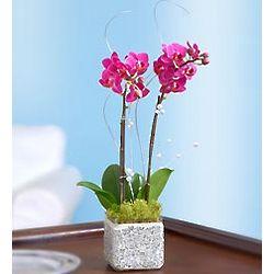 Mosaic Mirror Orchid Garden in Glitter Planter