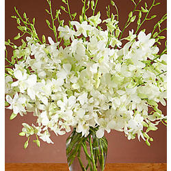 White Dendrobium Orchids Bouquet