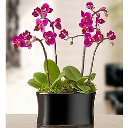 Petite Orchid Garden
