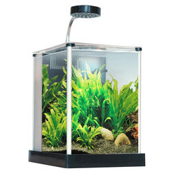 2 Gallon Spec Aquarium