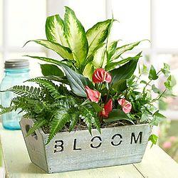 Bloom Dish Garden in Wood Container