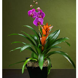 Mardi Gras Orchid Garden