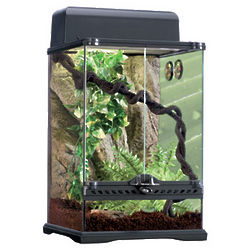 Rainforest Reptile Terrarium Kit