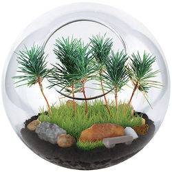 Park in A Bottle Terrarium