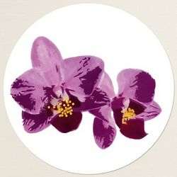 Orchid Beauty Round Label Envelope Seals