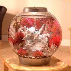 Silver 8 Gallon Aquarium Kit with Light