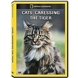 Cats - Caressing the Tiger DVD
