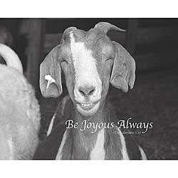 Happy Goat Plaque