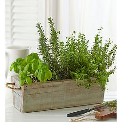 Organic Edible Garden in Recycled Window Planter