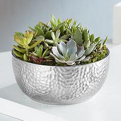 Sucka For Succulent Plants