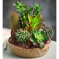 Stuck On You Large Cactus Garden