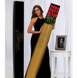 6 Foot Tall Long Stem Red Roses - One Dozen