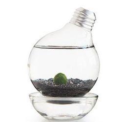 Marimo Moss Ball Light Bulb Terrarium