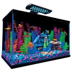 10 Gallon Aquarium Kit