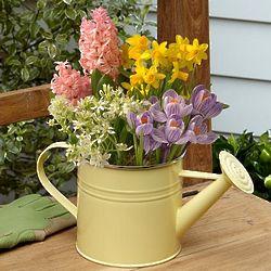 Spring Morning Bulb Garden