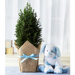 Deluxe Growing Tree for Baby Boy