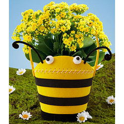 Yellow Kalanchoe in Honey Bee Felt Planter