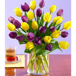 30 Royal Dutch Tulips Bouquet