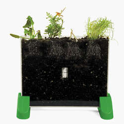 Watch It Grow! Plant Viewer