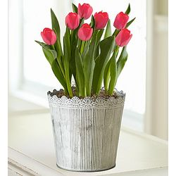 Spring Country Tulips in Galvanized Tin Planter