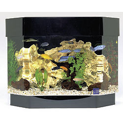 Aquarium Mini-Kit