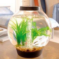 Four Gallon Aquarium Kit with Light