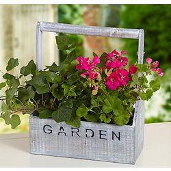 Gardener's Flowering Plant Gift Set