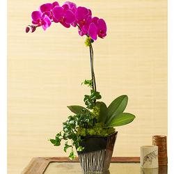 Magenta Orchid Medley