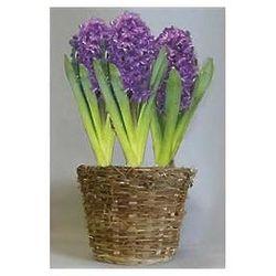 Purple Hyacinth Flower Bulb Gift Basket