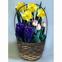 Flowering Bulb Garden Gift Basket