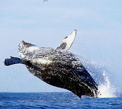 Whale Watching in Monterey, California for 1