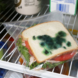 Fake Mold Sandwich Bags