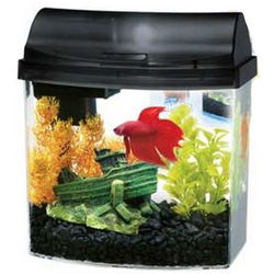 MiniBow Desktop Aquarium Kit