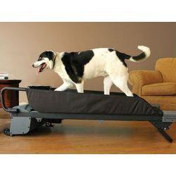 Medium Canine Treadmill
