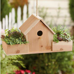 Birdhouse with Succulent Plants