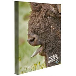 North America Bison Canvas Wall Art