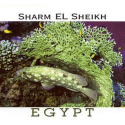 Sharm el Sheikh - Red Sea Postcard